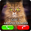 Fake Video Call Cat icon