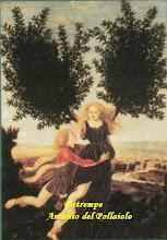 Photo: detrempe Antonio del Pollaiolo Apollon et Daphne vers 1475