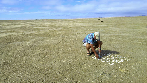 Knowledge thirst: A researcher sets up arrays of small tiles across the Namib to understand the growth and evolution of bacterial communities. Picture: SUPPLIED