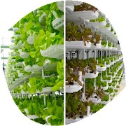 Agriculture Hydroponics icon