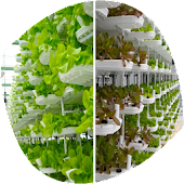 Agriculture Hydroponics