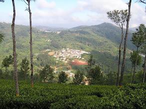 Photo: 7B220942 na plantacji herbaty