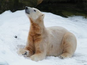 Photo: Ein hochzufriedener Knut haelt Ausschau nach Gianna ;-)