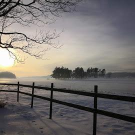 Wooden fence by Monita Alstadsæter - Uncategorized All Uncategorized ( nature, wood, fence, sun, fog,  )