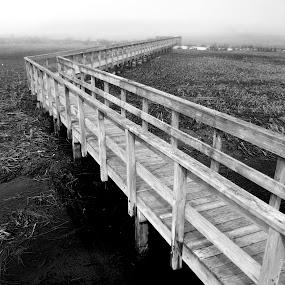 Walk the plank by Dan Allard - Landscapes Beaches ( black and white, pwclines, plank, marsh, pwcbwlandscapes, beach, bridge, swamp, boardwalk )
