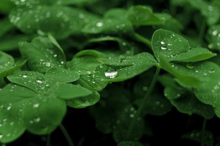 Gocce dopo la pioggia di robynut