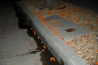 Photo: A massive deadfall of palm berries, Santa Barbara, California, Sept, 11, 2012.