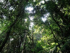 Photo: In Nyungwe rainforest...