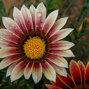 by David Botha - Flowers Flower Gardens (  )