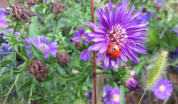 Viola colore della metamorfosi. di Monica_Saba