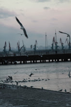 Photo: Žuvėdros šaltyje.   The seagulls in the cold.
