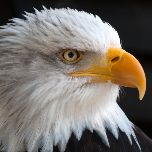 Free Live Eagle Wallpapers Apps On Google Play