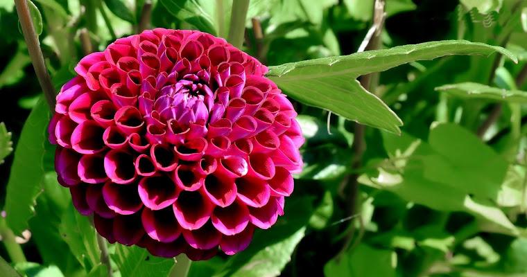 flower.... di Francesco Di Maio