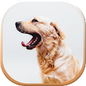 Flying Dog - Wild Simulador icon