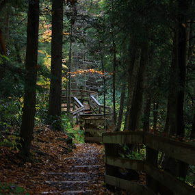 Pathway to Serenity by Melissa Toothman - City,  Street & Park  City Parks ( nature, autumn, fall, path, forest )