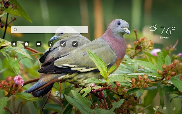 Pigeon HD Wallpapers New Tab