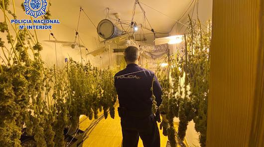 Un agente de Policía Nacional, en el interior de la plantación.
