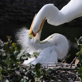 Deep throat by Charles  English - Animals Birds