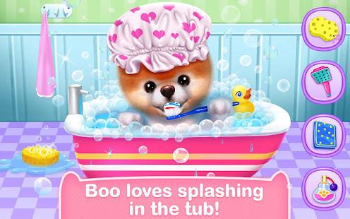 Boo – The World's Cutest Dog 8