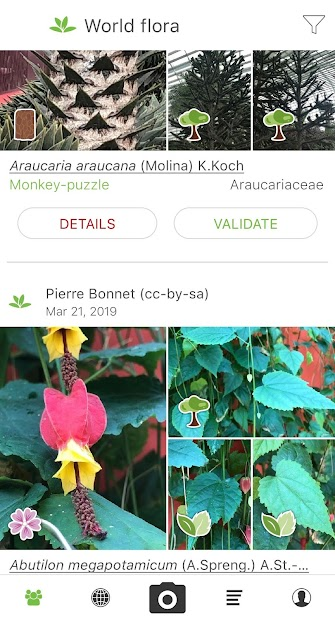 PlantNet Plant Identification Android App Screenshot