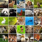 +1100 Animal Wallpapers