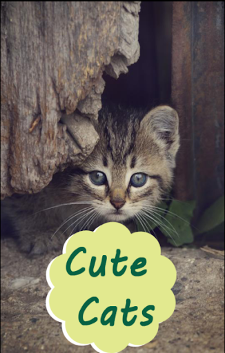 cute cat and kitten wallpapers