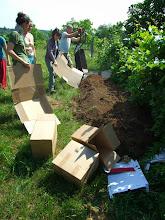 Photo: karton takarásra került a kikerülő föld. a tarack és a gyomok visszaszorítása miatt https://www.facebook.com/reginakertgodollo