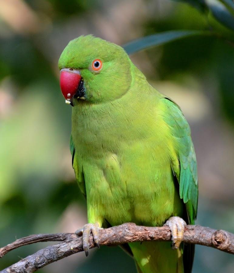 by Rengakrishnan Nagarajan - Animals Birds