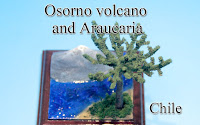 -Osorno volcano & Araucaria -Chile-