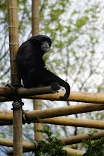 Photo: A monkey of some sort watches everybody from his perch