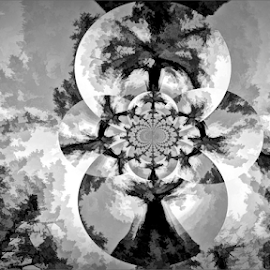 Tree fantasy by Kittie Groenewald - Digital Art Abstract ( abstract art, monochrome )