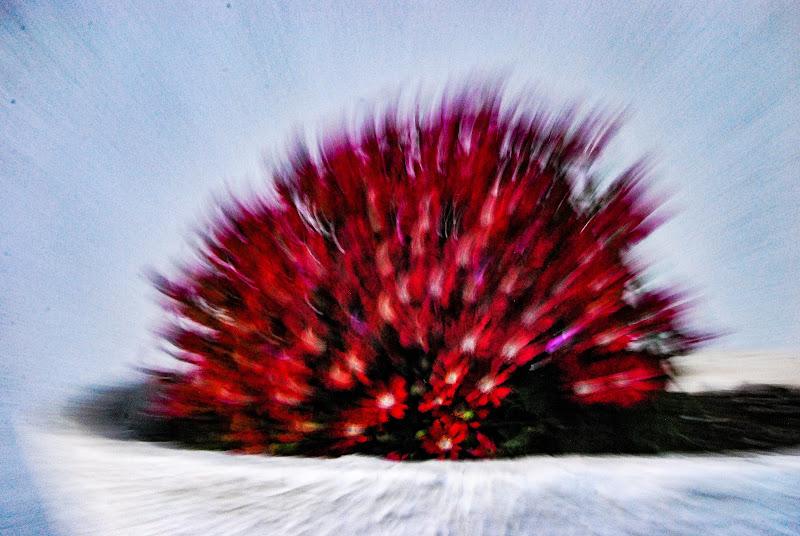 E' esplosa la primavera! di rosy_greggio