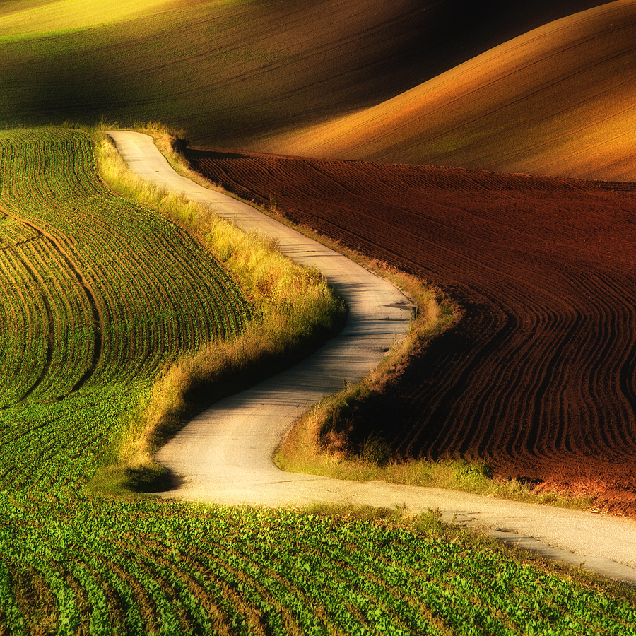 A road to nowhere by Jozef Micic - Landscapes Prairies, Meadows & Fields ( field, winding, waves, road, yellow, landscape )