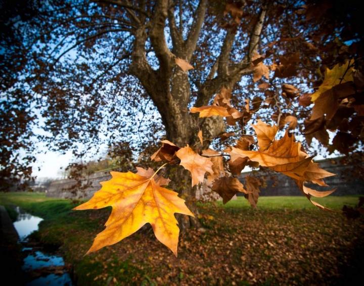 Si sta come d'autunno sugli alberi.... di bondell