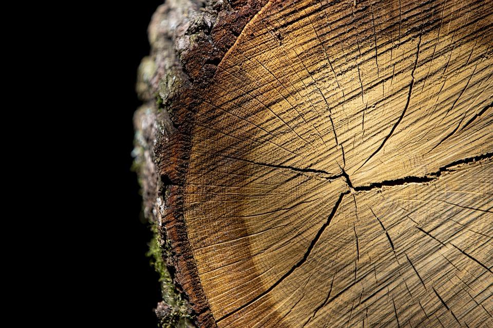 Hausse du prix du bois de construction : les raisons d'une telle flambée