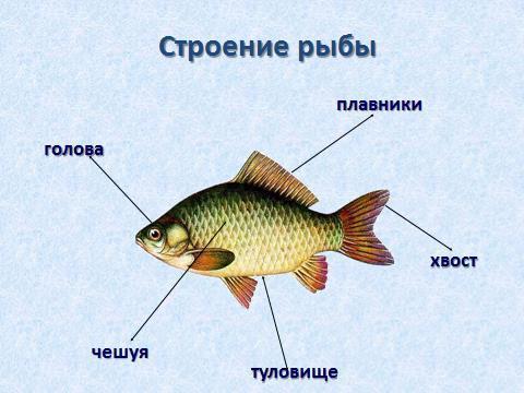 Рекомендации для родителей по теме недели «Рыбы» - PDF Скачать ...