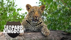 Leopard Kingdom thumbnail