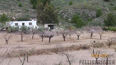 Photo: Ibland stöter vi på en Mandelodling under ordnade former. Träden står i Givakt på långa rader, vi är nu lite längre upp i bergen igen så kylan gör att dessa träd knappt startat sin blommning