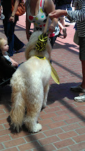 Photo: Convention Center - Even dogs get into the cosplay