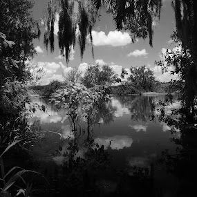 Reflection by Jeremy Barton - Nature Up Close Trees & Bushes ( water, sky, tree, bushes, florida, river )
