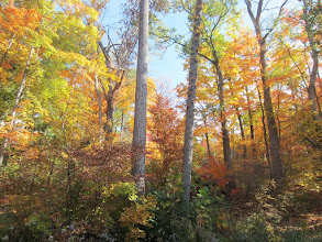 Photo: Gorgeous autumn woods at Hills and Dales Metropark in Dayton, Ohio.