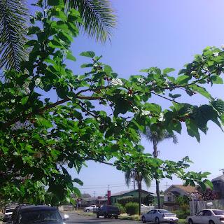 Balsamic Mulberry Jam