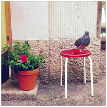 Photo: Pigeon composition. I paid that pigeon to pose for me.