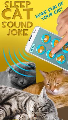 Sleep Cat Sound Joke - screenshot