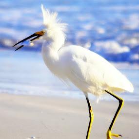 Egett by Colleen Rohrbaugh - Animals Birds (  )