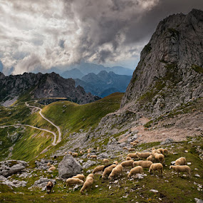 Grazing under Mangart by Aleš Komovec - Landscapes Mountains & Hills
