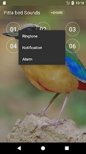 Pitta (genus) bird sound ringtones - náhled