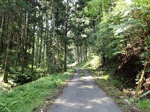 後は林道歩き