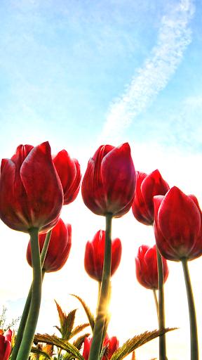 花背景 花的图片
