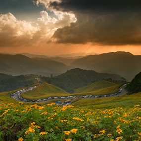 Mexican sunflower's field by Natapong Paopijit - Landscapes Mountains & Hills ( plant, curve, parking, bright, sunflower, daisy, yellow, beauty, vibrant, road, landscape, spring, sun, blossom, pasture, sky, nature, foliage, weather, flower, green, lush, beautiful, agriculture, cloudscape, sunlight, rural, field, environment, season, color, wildflower, sunset, outdoors, meadow, cloud, summer, scene, day, stem, garden, floral, growth )